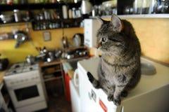 De getijgerde kat in de keuken Stock Afbeeldingen