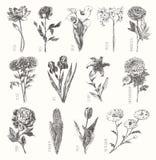 De in getrokken inzamelingshand bloeit bloemenreeks Stock Afbeeldingen