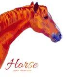 De getrokken kleurrijke vectorillustratie van het waterverfpaard hand op witte achtergrond, decoratief profieldier voor vector illustratie
