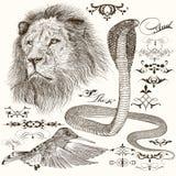 De getrokken reeks van hand detailleerde dieren en bloeit Royalty-vrije Stock Foto