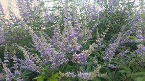 De geur van de zomer met mooie viooltjes in bloei Stock Foto's