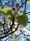 De geur van de lente stock afbeelding