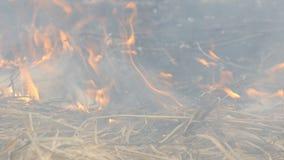 De gevaarlijke wilde brand in aard, brandwonden droogt gras Gebrand zwart gras in bosopen plek stock videobeelden
