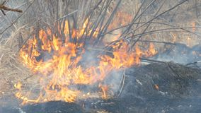 De gevaarlijke wilde brand in aard, brandwonden droogt gras Gebrand zwart gras in bosopen plek stock footage