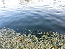 De gevallen bladeren in het water Royalty-vrije Stock Fotografie