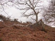 de gevallen bladeren van de de wind rode witte hemel van de de herfstboom Stock Afbeelding