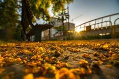De gevallen bloemen van de boom liggen op het asfalt in de stralen van de het plaatsen zon in het park van Turia valencia royalty-vrije stock foto