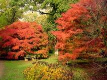 De gevallen de herfstbladeren omringen een rustieke bank stock afbeeldingen