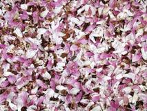 De gevallen Magnolia komt Achtergrond tot bloei Royalty-vrije Stock Fotografie