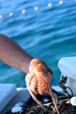 De gevangen Octopus van de vissersholding vers Royalty-vrije Stock Foto's