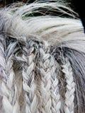 De gevlechte grijze poney van het paardhaar Royalty-vrije Stock Foto