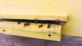 De gevleugelde bij vliegt langzaam aan bijenkorf verzamelt nectar op privé bijenstal van levende bloemen stock video