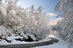 De Gevoerde Weg van de winter Boom met Sneeuw stock afbeeldingen