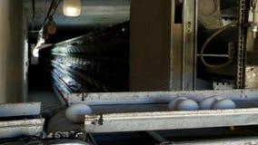 De gevogeltefabriek om kippeneieren, kippeneieren te maken gaat door transportband, close-up, grills stock video