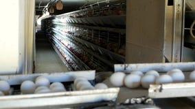 De gevogeltefabriek om kippeneieren, kippeneieren te maken gaat door transportband, close-up, de industrie stock footage