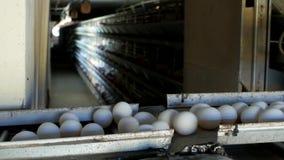 De gevogeltefabriek om kippeneieren, kippeneieren te maken gaat door transportband, organisch close-up, stock video