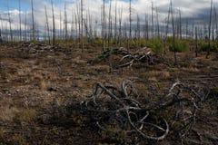 De gevolgen van een brand in het bos Royalty-vrije Stock Fotografie