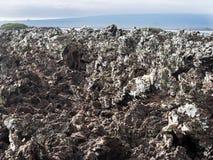 De gevulde lava op eiland Islote Tintoreras herdenkt op de maan landt, de Galapagos, Ecuador stock fotografie