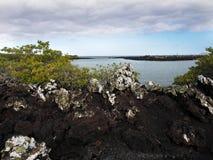 De gevulde lava op eiland Islote Tintoreras herdenkt op de maan landt, de Galapagos, Ecuador stock foto