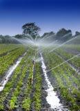 De gewassen van het water stock afbeelding