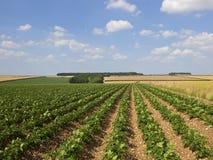 De gewassen van de hooglandaardappel in een het landschapslandschap van de lapwerkzomer royalty-vrije stock afbeelding