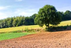 De gewassengebied en boom van de zomer Stock Foto's