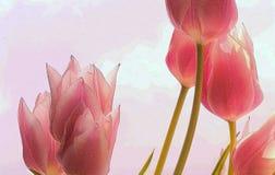 De geweven abstracte achtergrond van de tulpenlente royalty-vrije stock fotografie