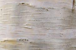 De geweven natuurlijke achtergrond van de esdoornboom Stock Afbeelding