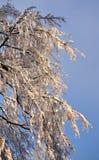 De gewogen boegen wijzen van recentste noch Pasen-sneeuwval af royalty-vrije stock foto's