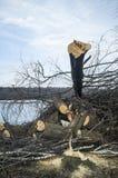 De gezaagde bomen liggen in een hoop op de bank van de rivier, tegen de achtergrond van het bos, tijdens de de winterdag stock fotografie