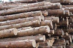 De gezaagde boomboomstammen in de zaagmolen, unshaved pijnboombomen in voorraad stock foto