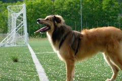 De gezondheid van uw hond stock fotografie