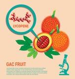 De gezondheidsvoordelen van het Gacfruit van Lycopene Stock Afbeeldingen