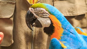 De Gids van de close-upmens voedt Papegaai op Wapen in KL-Vogelpark stock video