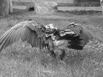 De gier van de monnik Royalty-vrije Stock Foto