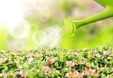 De gietende bloem van het water Stock Fotografie