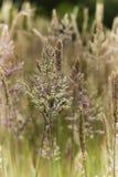 De Gietvorm gietvorm-weg Stock Foto