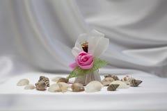 De gift van het suikergoed met shell op zijdeachtergrond Royalty-vrije Stock Foto's