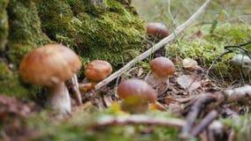 De Giften van de Herfst Het brood van de eekhoorn in bos stock videobeelden