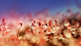 De glanzende ijskegels worden behandeld door groen mos in een bos in de winter Stock Afbeeldingen