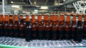 De glasflessen met bier worden gevuld bewegen zich langs de vervoerder die stock footage