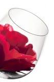 De glazen en de bloem van de wijn Stock Afbeeldingen