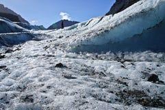 De Gletsjer Nieuw Zeeland van de vos Stock Foto's