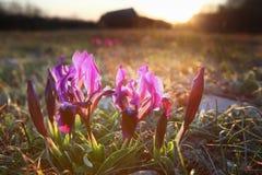 De glimlach van de lente Royalty-vrije Stock Foto's