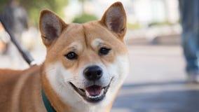 De glimlach van een hond stock foto's