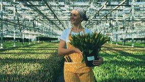 De glimlachende vrouw houdt emmer met gele tulpen terwijl het lopen in een serre stock videobeelden