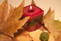 De gloed van de herfst Royalty-vrije Stock Foto's