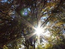 De Gloed van de zon Stock Foto's