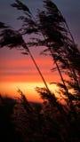 De gloed van de zonsondergang Royalty-vrije Stock Afbeelding