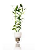 De gloeilamp van Eco met bamboe Royalty-vrije Stock Foto